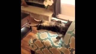 Смешные моменты с кошками