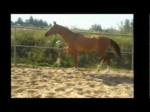 Продажа лошади!