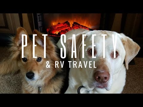 RV Travel Life | Safety Tips For RVing With Dogs