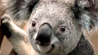une photo d'un bébé koala