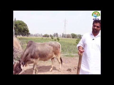 Young Organic Farmers of Punjab 2: Ravdeep Singh Pharwahi