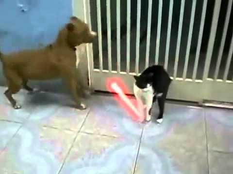Джедай кот против собак