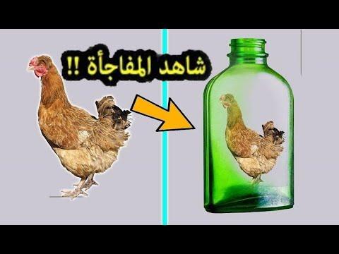 لغز محير     من يستطيع أن يخرج الدجاجة من الزجاجة !!! للاذكياء فقط