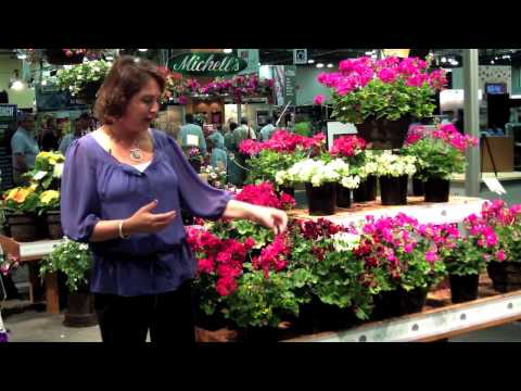 Geranium Calliope - All About Color