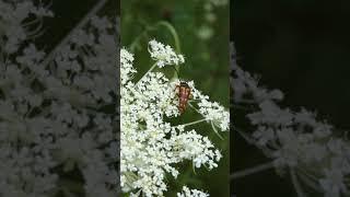 Wild flower 28 | 들꽃과 벌레들 휴식 영상