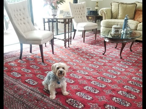 Color will Never RUN Oriental rug cleaning
