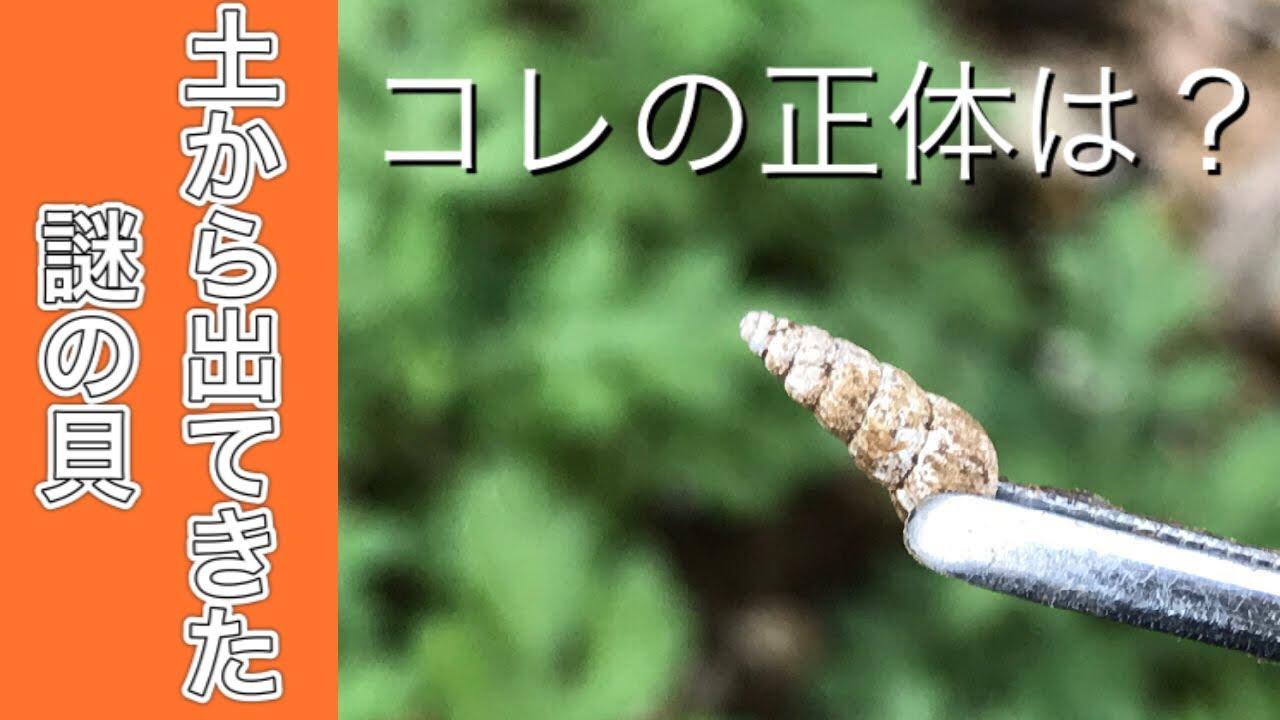 なにコレ?庭の土から出てきた謎の貝の正体を調べました。