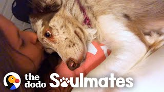 Dog Stares Adoringly At Her Mom All Day Long | The Dodo Soulmates