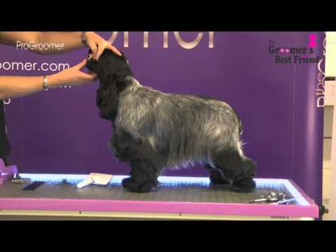 How to groom a Cocker Spaniel - Coat King - Grooming Guide- Pro Groomer