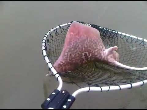 Skate Fishing At Frinton