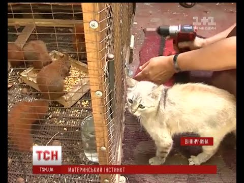 видео: Неочікуване материнство: кішка вигодувала власним молоком 6 білченят на Вінниччині