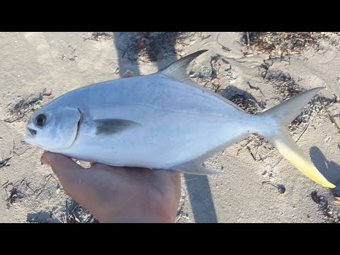 Florida Surf Fishing for Whiting and Pompano!
