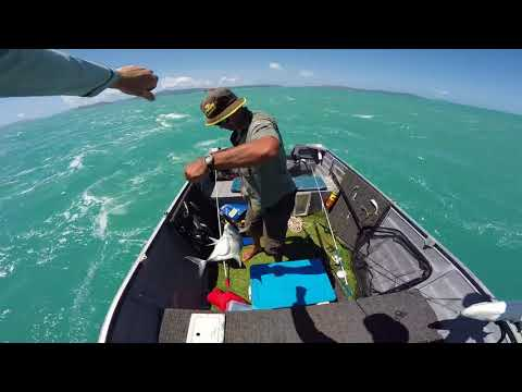 Fishing In Airlie Beach