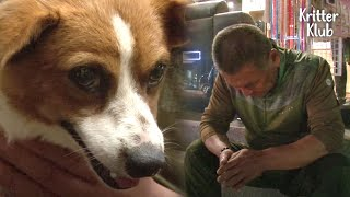 Owner Left Shooked By The Truth Revealed After He Brought His Lost Dog Home  | Kritter Klub