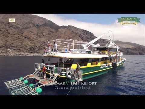 Guadalupe Island Trip Report HD