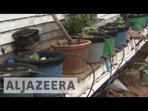Zimbabwe farmers getting creative within city limits
