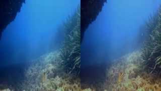 Vídeo submarino 3D. Portocolom (Mallorca). Junio de 2014.
