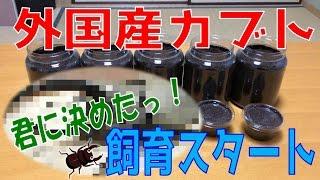 昆虫採集☆カブトムシ☆クワガタムシ 外国産カブトムシ飼育スタート】(く...