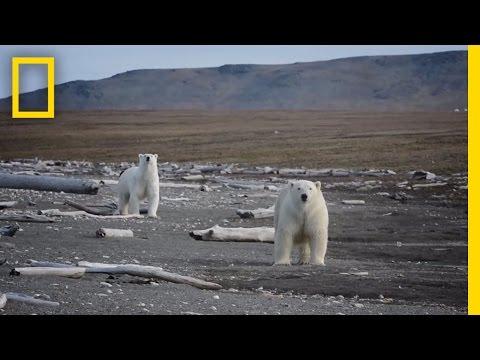 Animals Thrive on Pristine Russian Island   National Geographic