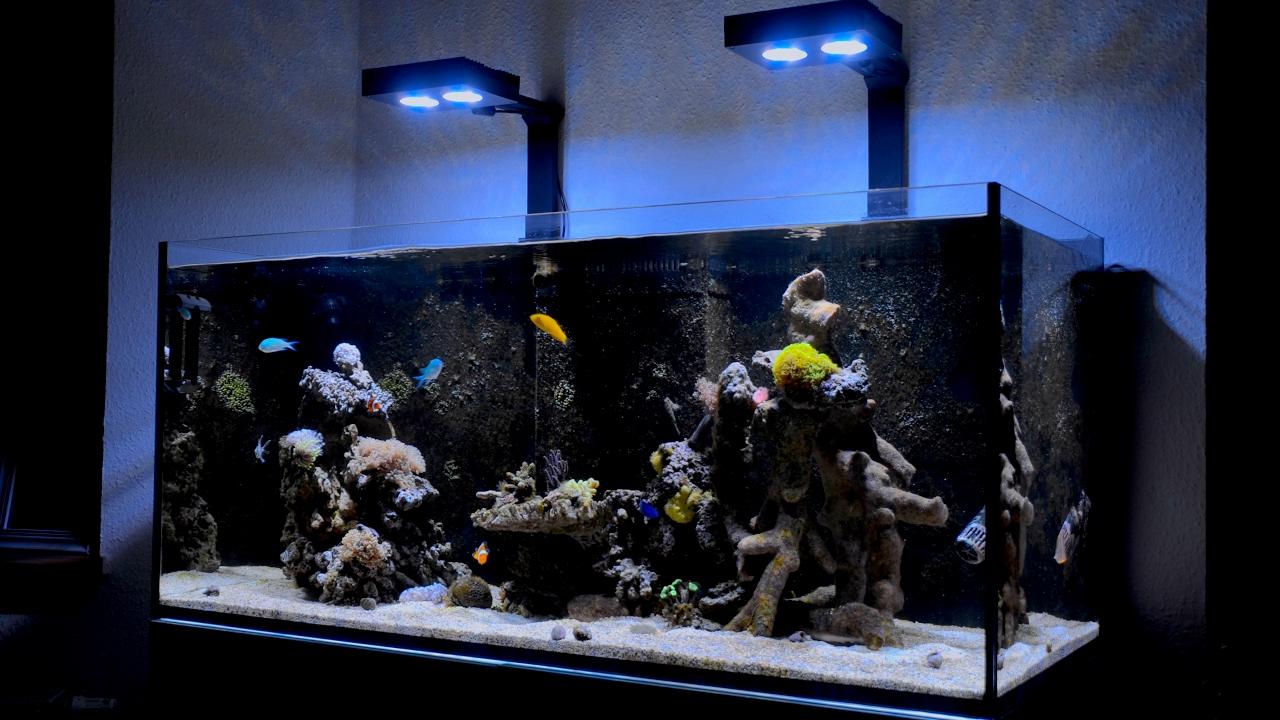 Red Sea Reefer 350 Marine Reef Tank Meerweraquarium Update 02 2017