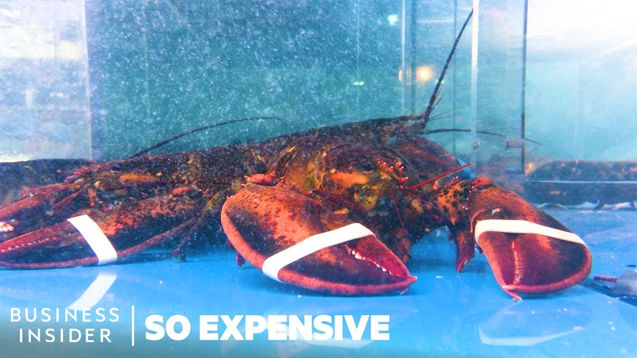 Why Lobster Is So Expensive