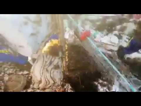 Alga invasora en las redes de los pescadores de Tarifa