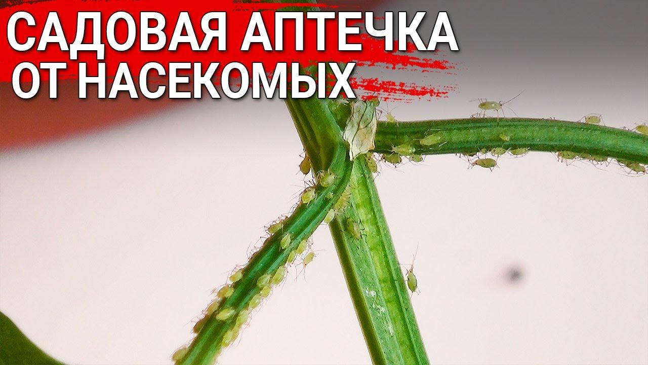 Садовая аптечка от насекомых