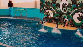 Шоу дельфинов в парке Ривьера Сочи/Dolphin show in Riviera Park Sochi