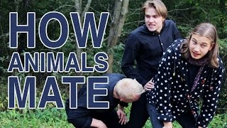 Repeat youtube video HOW ANIMALS MATE