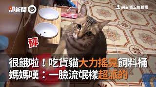 很餓啦!吃貨貓大力搖晃飼料桶  媽媽嘆:一臉流氓樣超派的