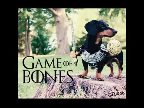 Crusoe, the Celebrity Dachshund : Adventures of th ...