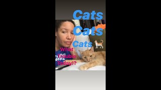 What Trouble Today//Cats #rescues