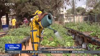 Senegalese entrepreneurs find food security, extra income in raised gardens