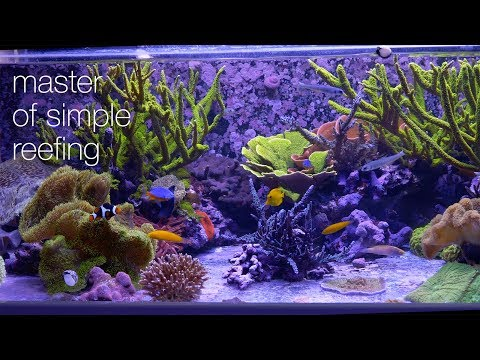 Amazing Aquariums & Reefs Lives Up To Its Name