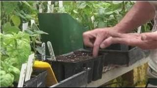 Nutritious Gardening : Planting Okra Seeds