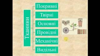 Біологія рослин. Тема 1. Тканини рослин