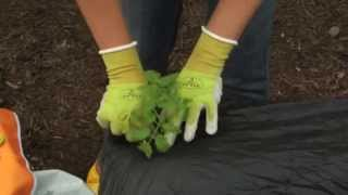 Planting a Single Row Crop
