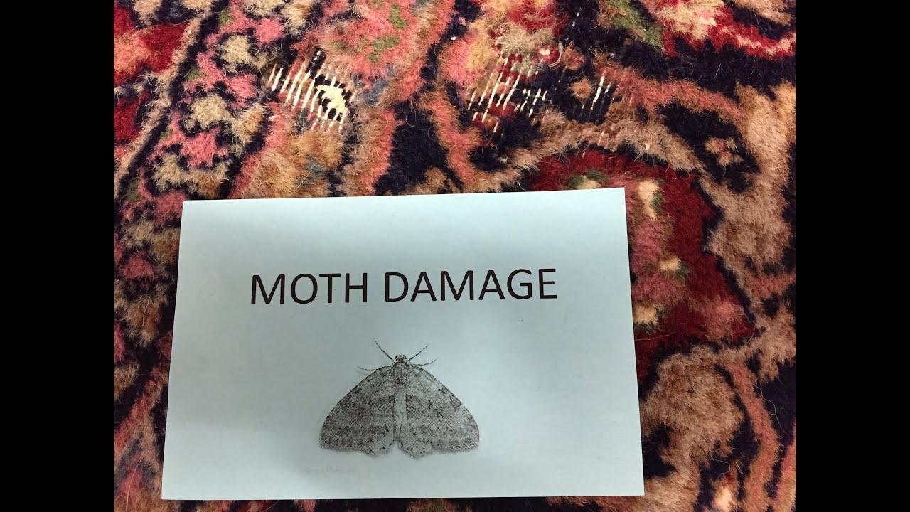 Moth Damage On Oriental Rugs Boston   YouTube