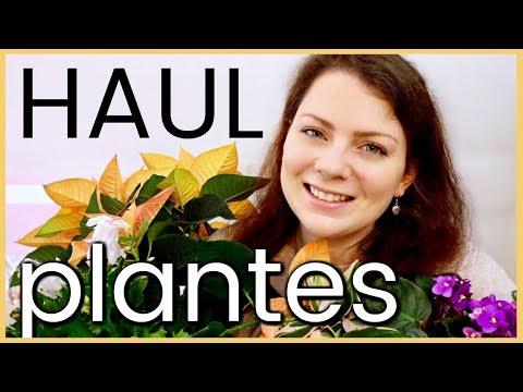 PLANT HAUL - Plantes d'intérieur, terre et accessoires ! mes derniers achats en jardinerie