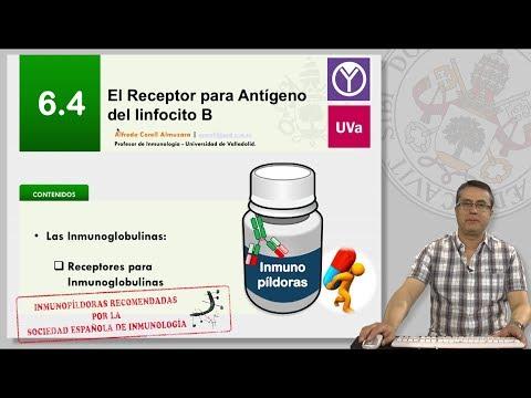 6.4 EL RECEPTOR PARA ANTÍGENO DEL LINFOCITO B