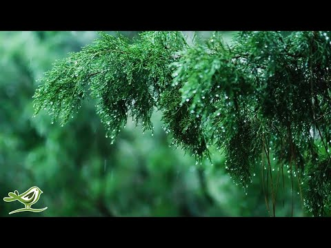 Calming Piano Music with Rain & Thunder Sounds for Sleep or Relaxing • 'Rainy Day'