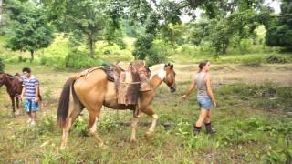 Volunteer on the Organic Farming Project on the Osa Peninsula of Costa Rica
