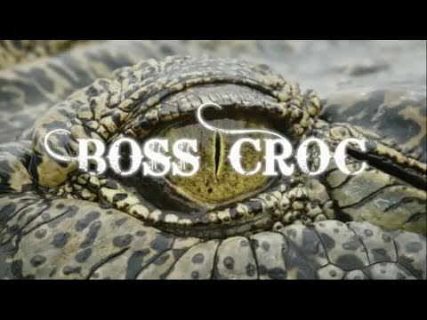 Boss Croc - National Geographic Destination Wild