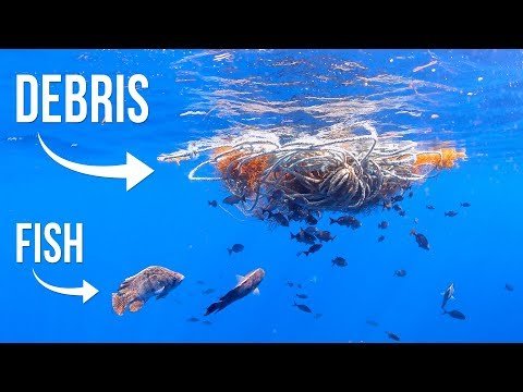 Searching For Fish Under Floating Debris