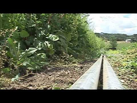 Organic Farmer Nervous About GMOs - Jun 5th, 2012