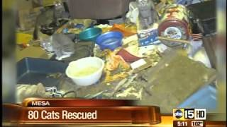 80 cats pulled from Mesa home in hoarding case
