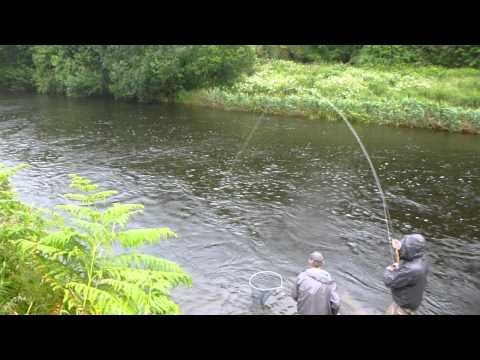 Salmon fishing on the Bandon River. (Clonakilty bass angling guide).