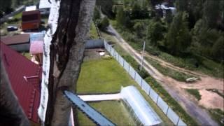 видео Валка деревьев