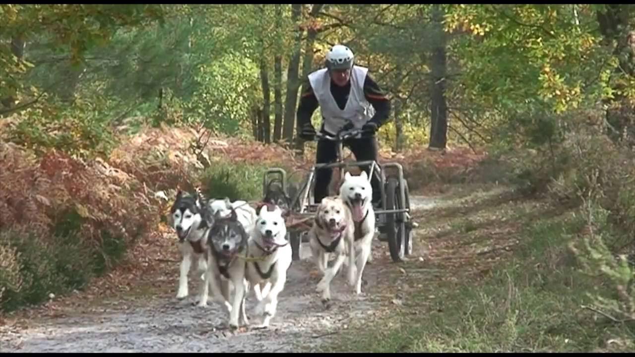 Bande-annonce course de chiens de traineau 2016