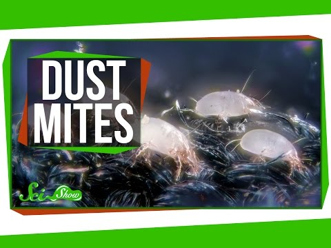 3 Things You May Not Want to Know About Dust Mites - YouTube